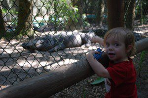 August gestures at a gator that looks way too close for comfort.