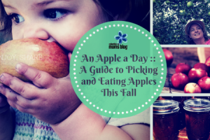 An apple a day a guide to picking and eating apples this fall