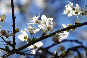 flowers-291902_1280