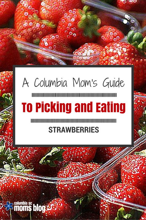 A COLUMBIA MOMS guide to picking and eating strawberries