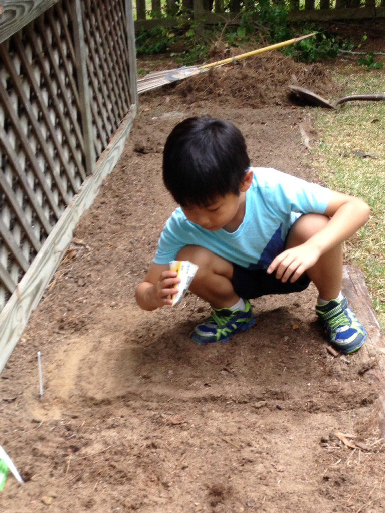 My son planting seeds, and trampling on others.