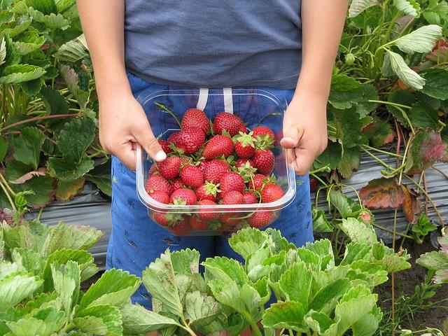strawberries-660432_640