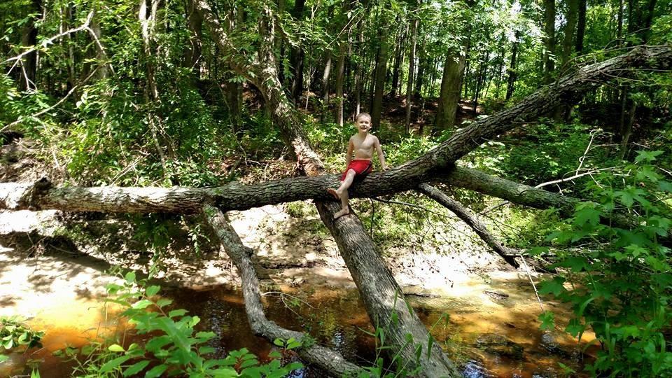14 mile tree
