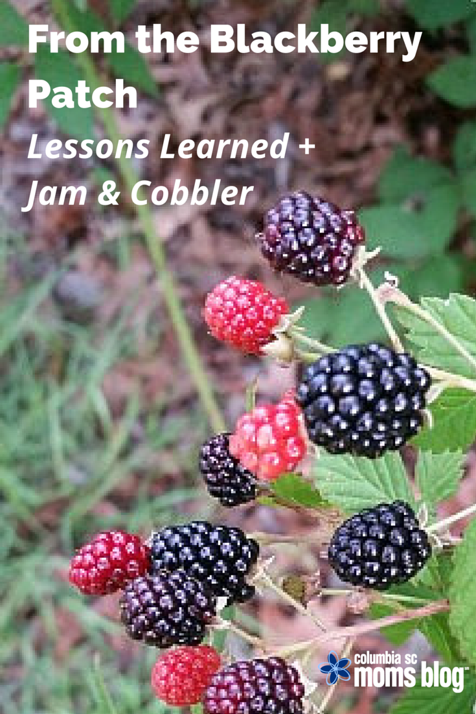 from the blackberry patch lessons learned jam cobbler
