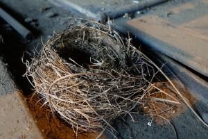 nest-701552_640
