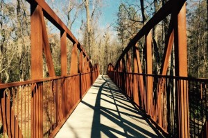 Timmerman Trail in Cayce - A Great Local Hike for Kids - Columbia SC Moms Blog