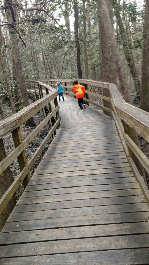 Boardwalks at Congaree Swamp