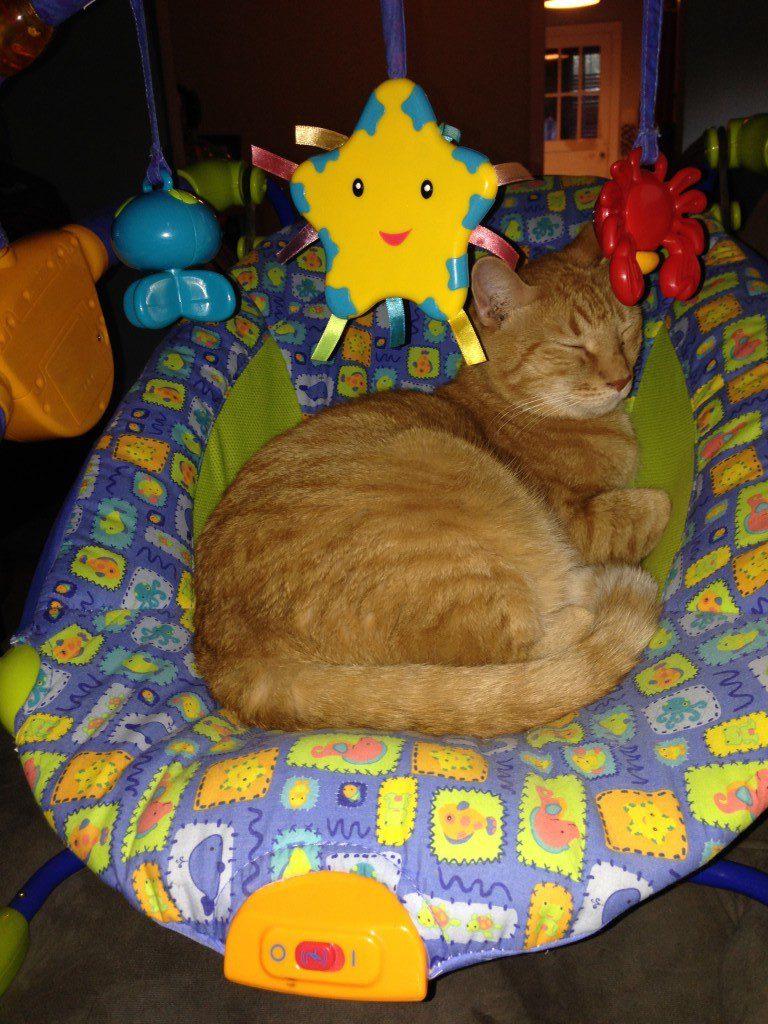 Orange tabby in baby chair