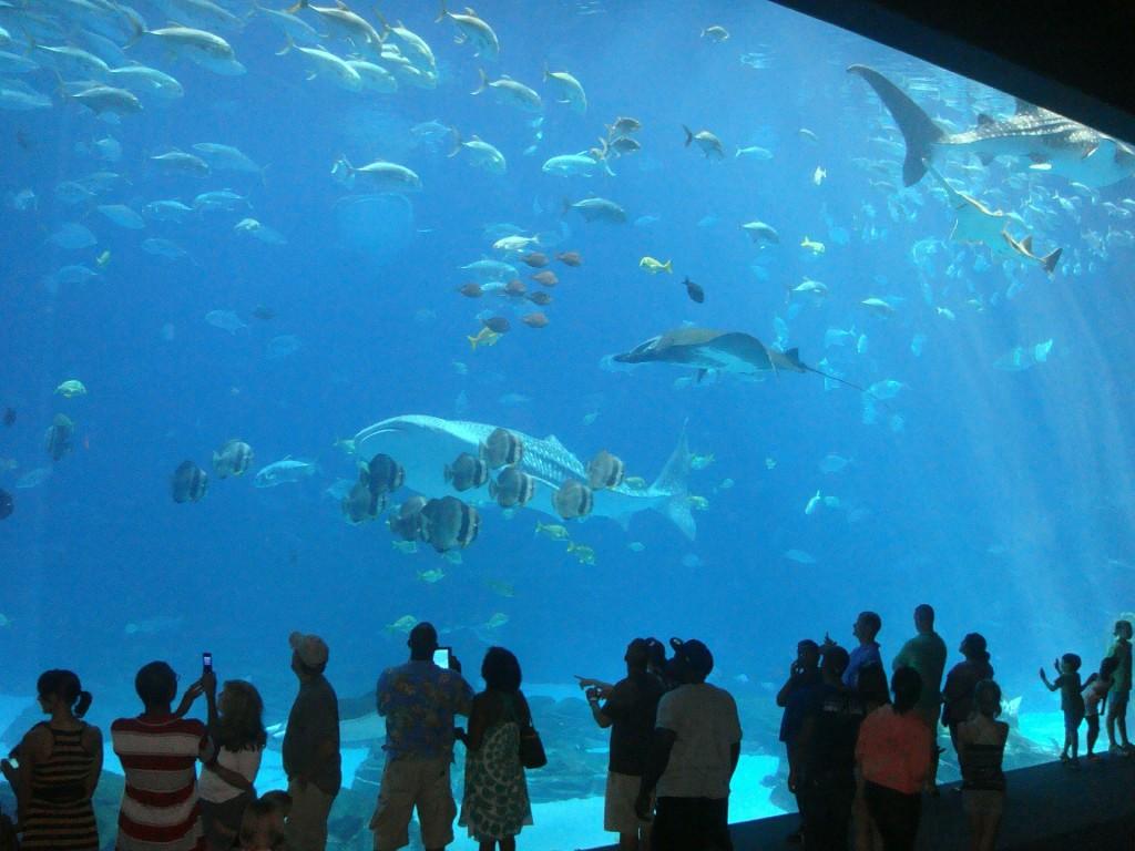 aquarium-456566_1920