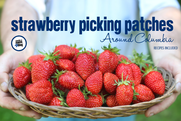 Strawberry Picking Patched Around Columbia - Recipes Included - Columbia SC Moms Blog