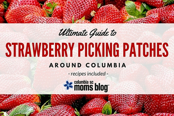Ultimate Guide to Strawberry Picking Patches Around Columbia - Recipes Included - Columbia SC Moms Blog 16