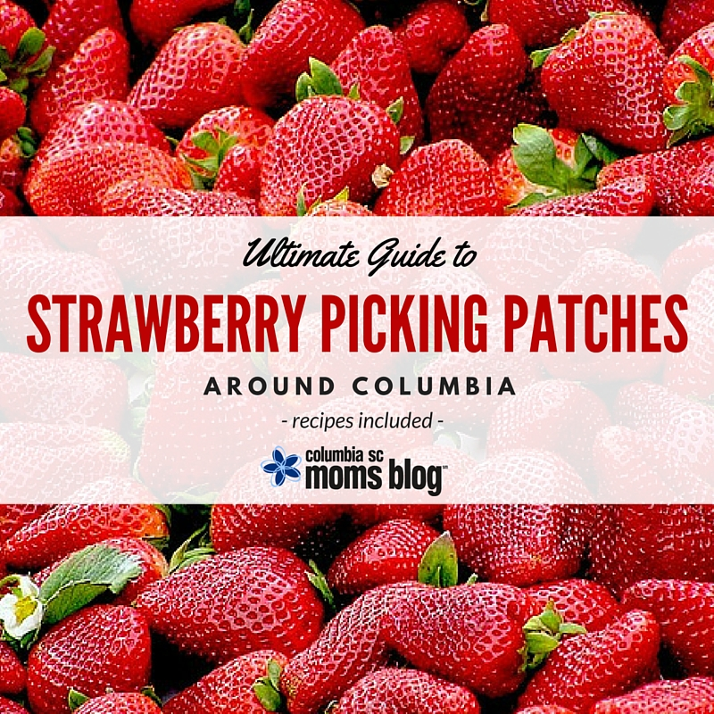 Ultimate Guide to Strawberry Picking Patches Around Columbia - Recipes Included - Columbia SC Moms Blog 2016