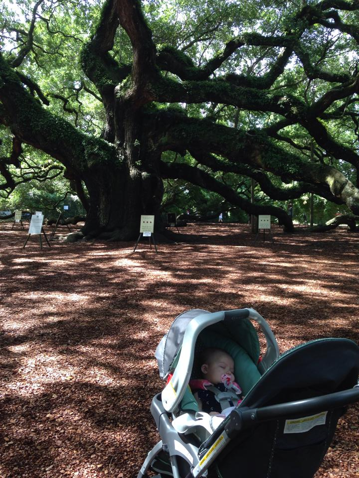 My sweet daughter napping at the Angel Oak in John's Island, South Carolina.