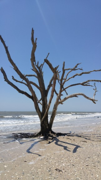Botany Bay on Edisto Island is absolutely beautiful!