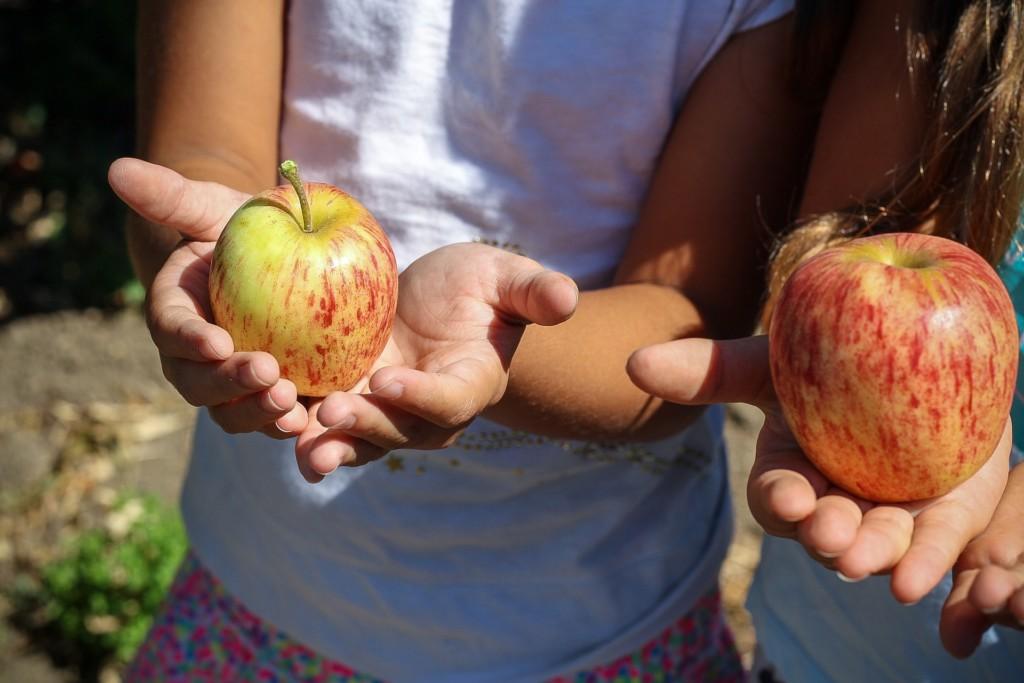 apple picking NC SC
