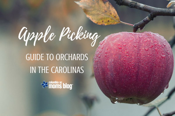 Apple Picking - Guide to Orchards in the Carolinas - Columbia SC Moms Blog