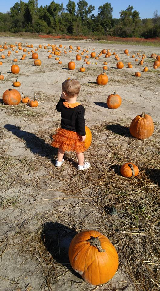 Columbia SC Pumpkin Patches