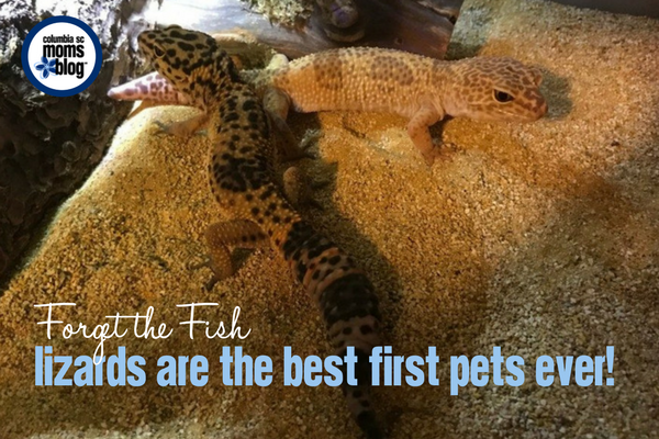 Forget the Fish, Lizards are the Best First Pets Ever! | Columbia SC Moms Blog