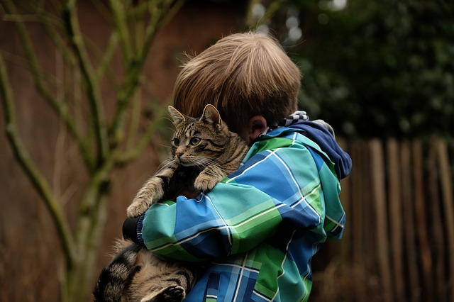 Allergic to Cats | Columbia SC Moms Blog