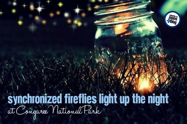 Synchronized Fireflies Light Up the Night at Congaree National Park | Columbia SC Moms Blog