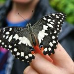 Make it a Day Trip! Butterfly Adventure Returns to Greenville {Ticket Giveaway}