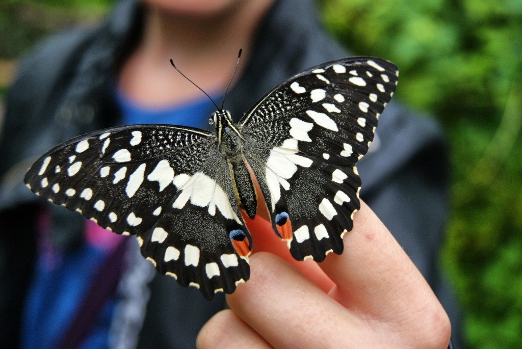 butterfly adventure