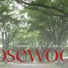 5 reasons I love rosewood neighborhood | Columbia SC Moms Blog