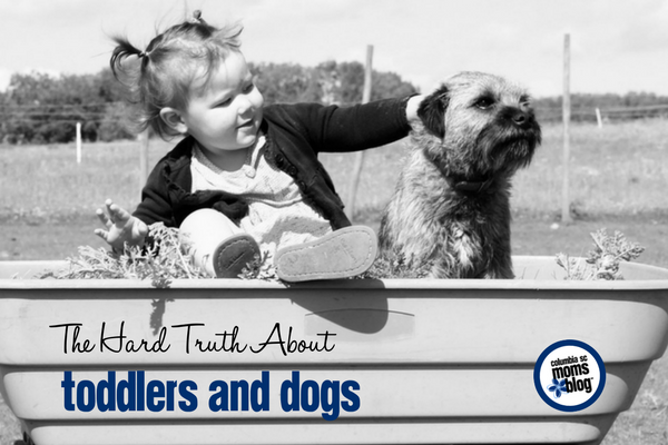 The Hard Truth About Toddlers and Dogs | Columbia SC Moms Blog