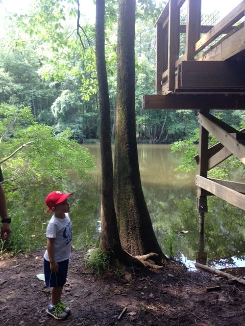 Nature hike at Congaree