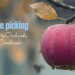 Apple Picking :: Guide to Orchards in the Carolinas