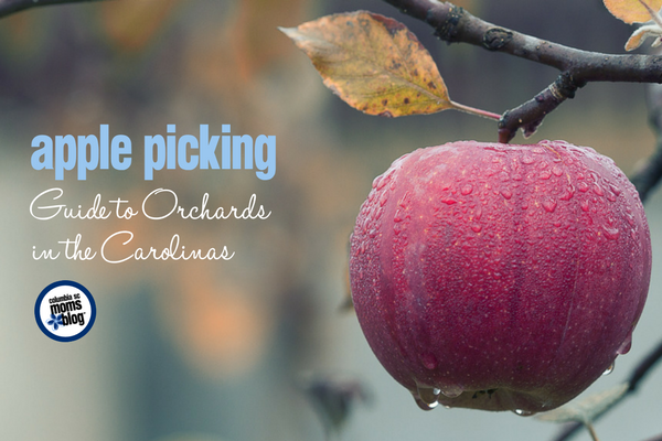 Apple Picking :: Guide to Orchards in the Carolinas | Columbia SC Moms Blog