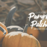 Guide to Pumpkin Patches Around Columbia
