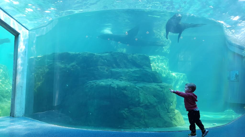 riverbanks zoo- botanical gardens- columbia sc