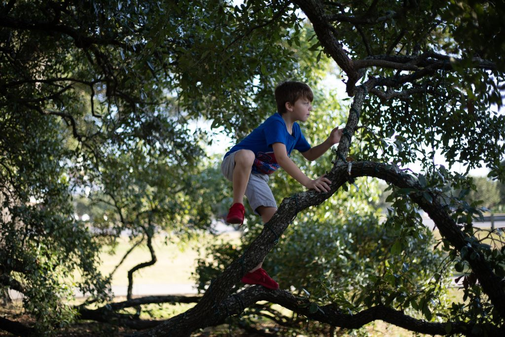 Child playing in tree
